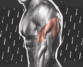 Забытая мышца: как увеличить объем трицепса всего за 30 дней